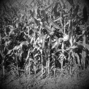 BW CornBalls